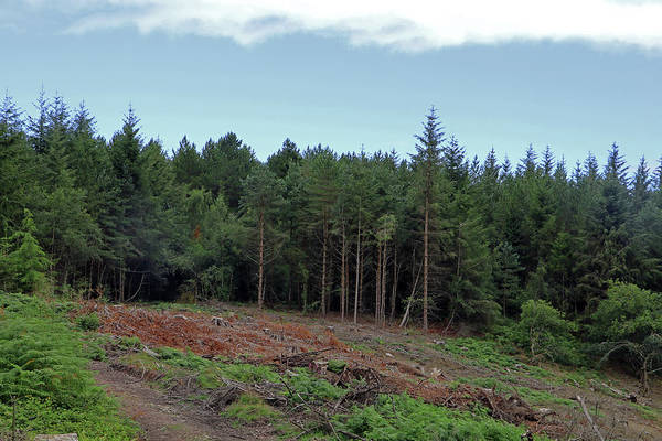 Photograph - Dunster Forest by Tony Murtagh