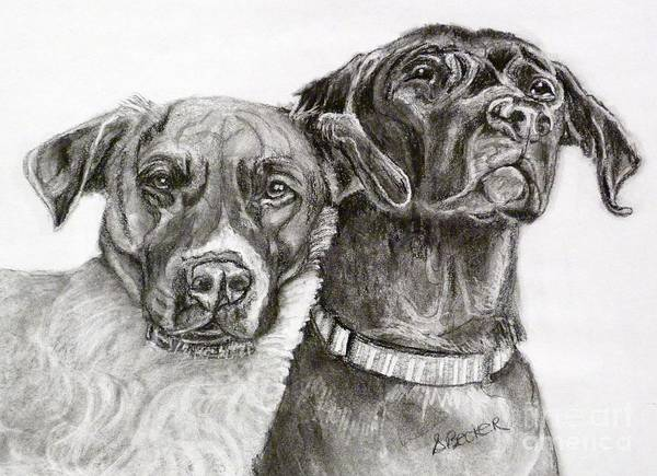 Drawing - Duo by Susan A Becker