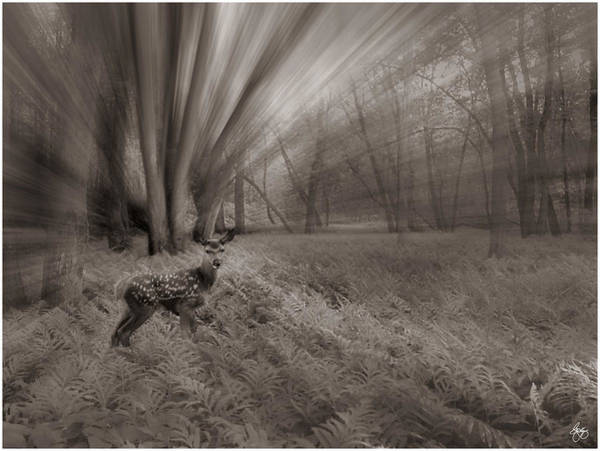 Photograph - Duochrome Fawn In A Floodplain Forest by Wayne King