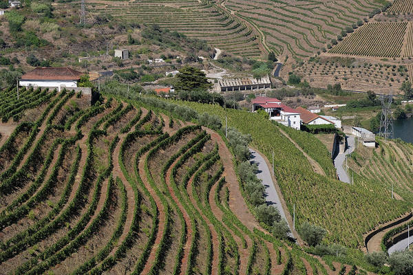 Wall Art - Photograph - Duoro Valley Vineyard Overview 1 - Portugal by Madeline Ellis
