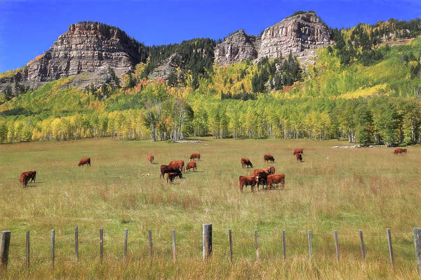 Wall Art - Photograph - Durango Moos by Donna Kennedy