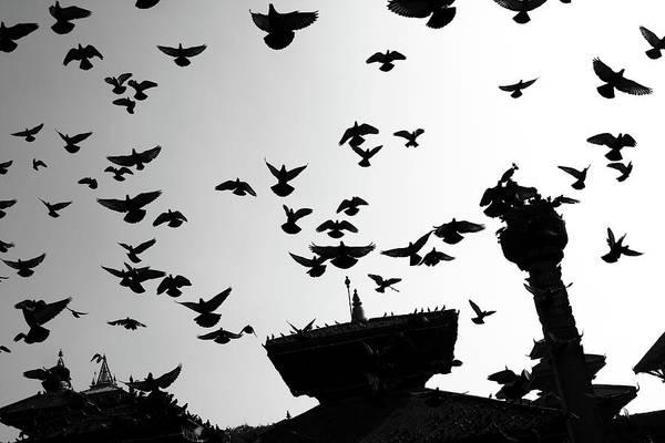 Photograph - Temple Birds, Durbar Square, Kathmandu by Aidan Moran