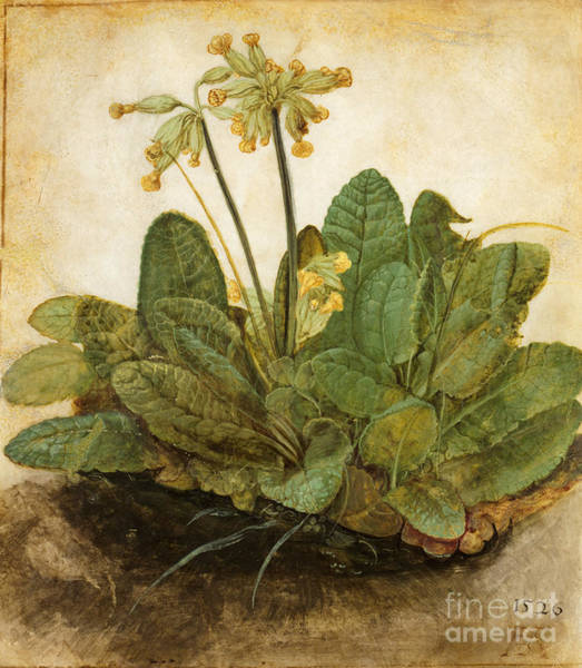 Photograph - Durer Tuft Of Cowslips by Granger