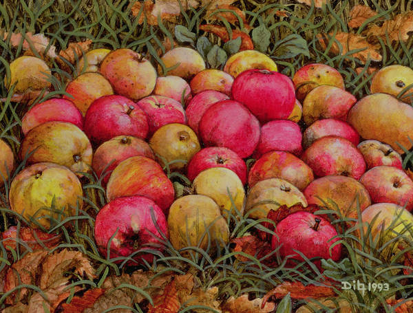 Apple Orchard Painting - Durnitzhofer Apples by Ditz
