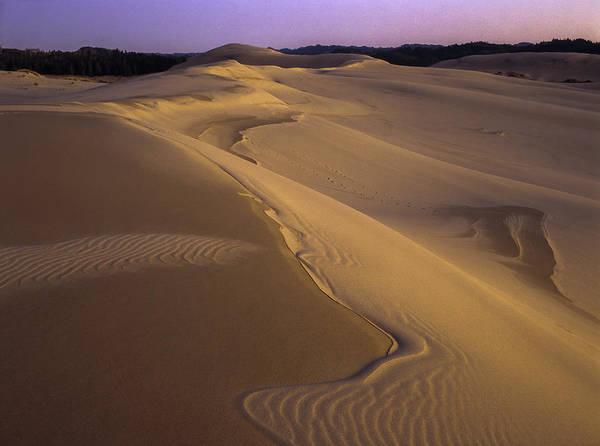 Photograph - Dusk Dune Patterns by Robert Potts