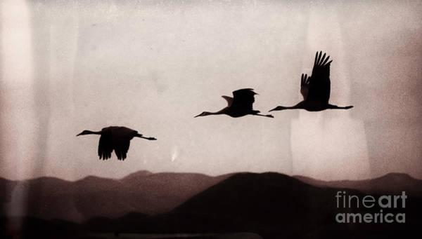 Photograph - Dusk Flight by Susan Warren