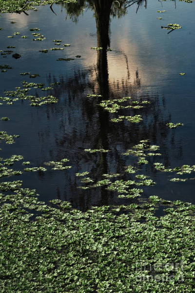 Wall Art - Photograph - Dusk In The Swamp by Margie Hurwich