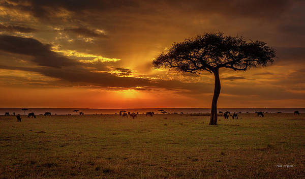 Photograph - Dusk Over  The Serengeti by Tim Bryan