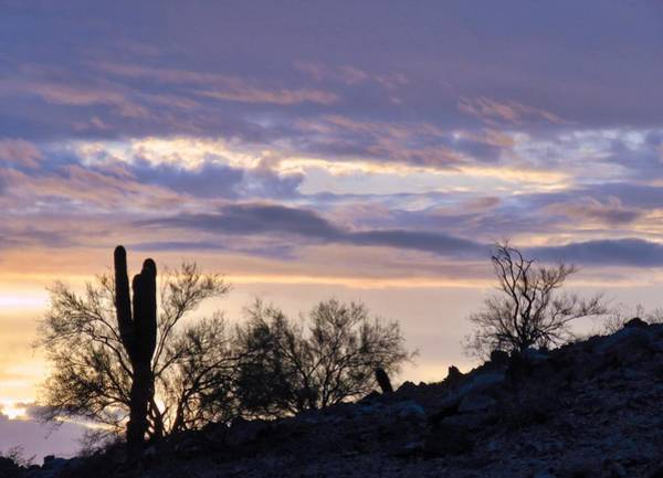 Photograph - Dusky Blue Desert by Judy Kennedy