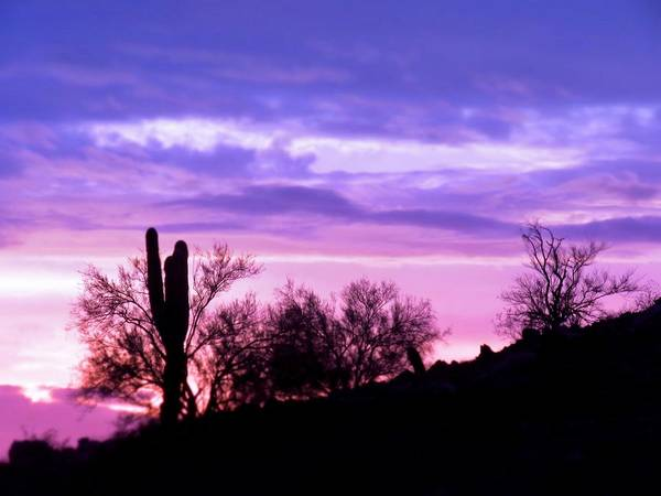 Photograph - Dusky Desert Purple-pink by Judy Kennedy