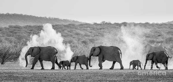 African Elephant Photograph - Dusty March by Inge Johnsson