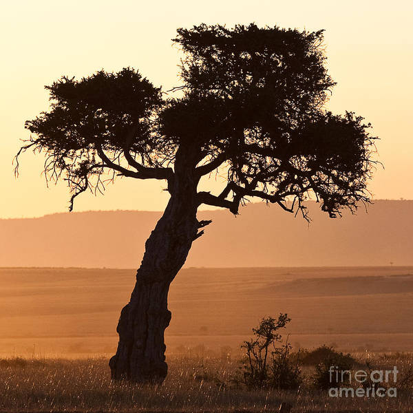 Photograph - Dusty Sunset Over The Mara by Colette Panaioti