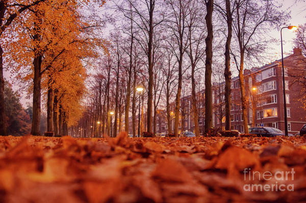 Photograph - Dutch Autumn In City  by Ariadna De Raadt