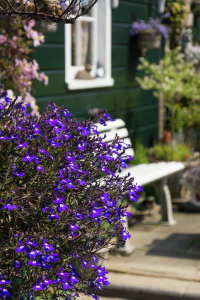 Photograph - Dutch Country Charm - Fabulous Purple Flowers by Georgia Mizuleva