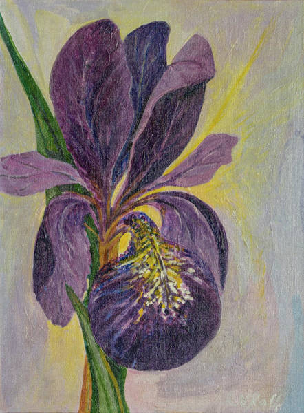 Fleur De Lys Painting - Dutch Iris In Purple by Rina Kaff