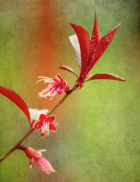 Photograph - Dwarf Peach Tree Branch by Reynaldo Williams