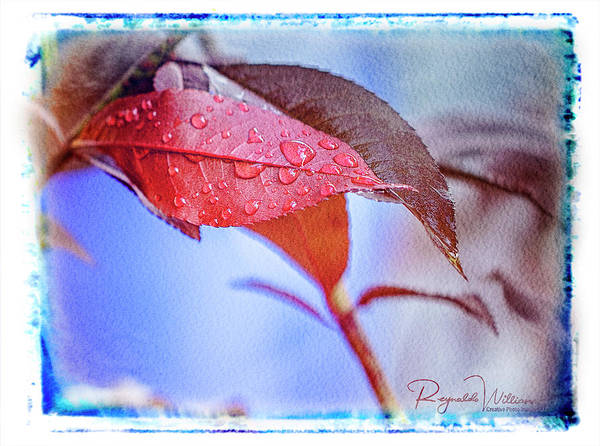 Photograph - Dwarf Peach Tree Leaf by Reynaldo Williams