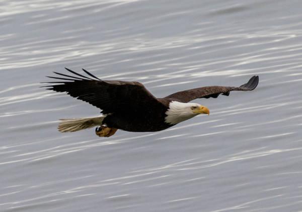 Eagle And The Sea Art Print