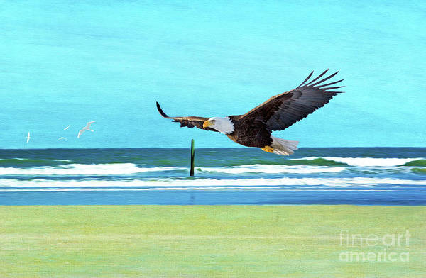 Flying Eagle Photograph - Eagle At Cumberland by Laura D Young