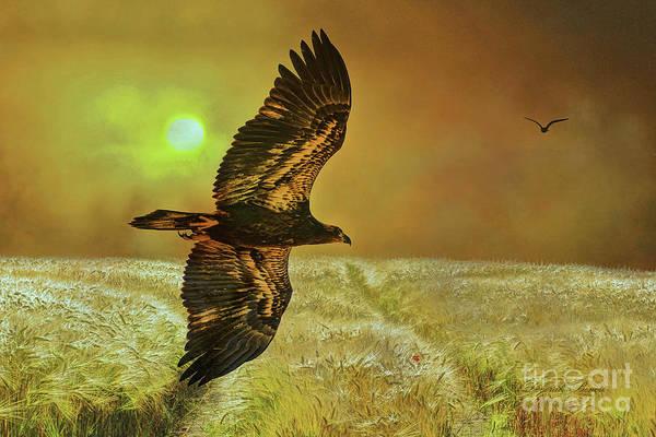 Mixed Media - Eagle At Dusk by Deborah Benoit