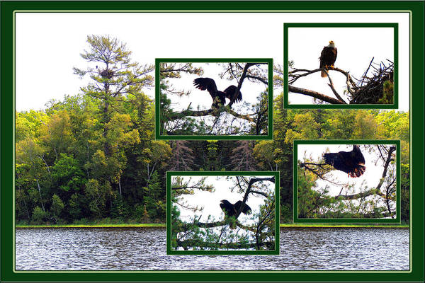 Wall Art - Photograph - Eagle Collage by Teresa Schomig