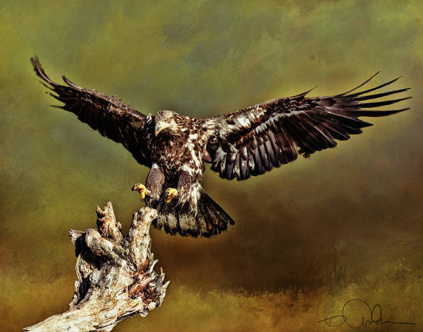 Digital Art - Eagle Coming In For A Landing by Gloria Anderson