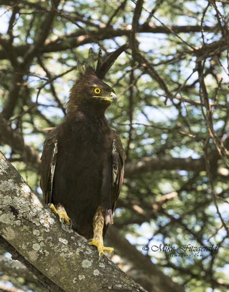 Photograph - Eagle Do by Mike Fitzgerald