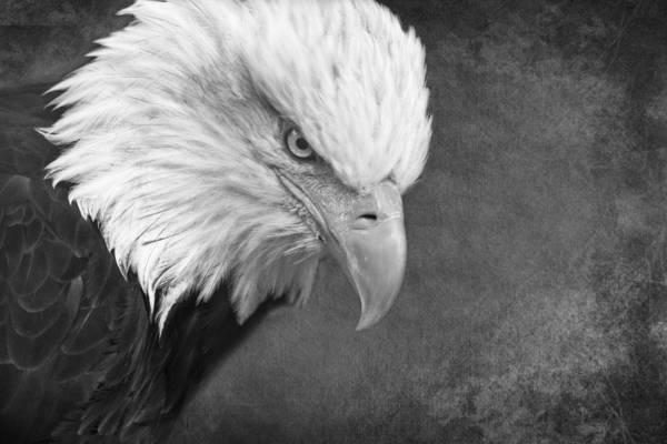 Photograph - Eagle Eye by Wes and Dotty Weber