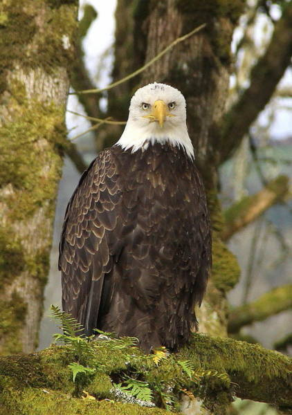 Raptor Photograph - Eagle Eyes by Angie Vogel