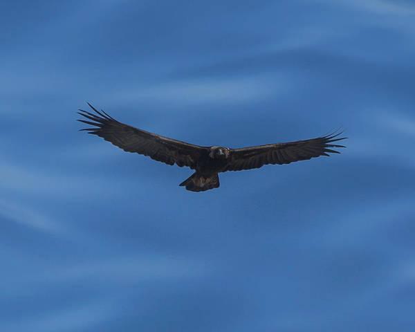 Colorado Wildlife Digital Art - Eagle Flight Digital Art by Ernie Echols