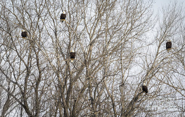 Photograph - Eagle Gang by Ricky L Jones