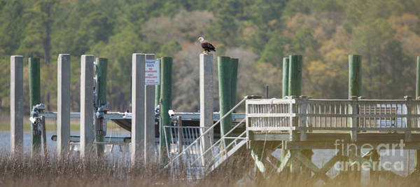 Photograph - Eagle Has Landed by Dale Powell
