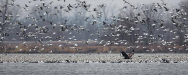 Hawk Creek Photograph - Eagle In Snow by Ryan Heffron