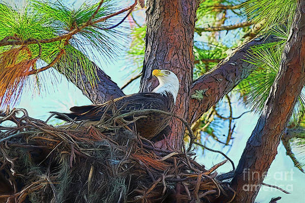 Painting - Eagle Nest Painterly by Deborah Benoit