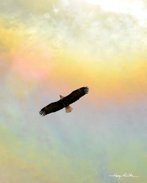 Photograph - Eagle Of The Fire Rainbow II by Harry Moulton