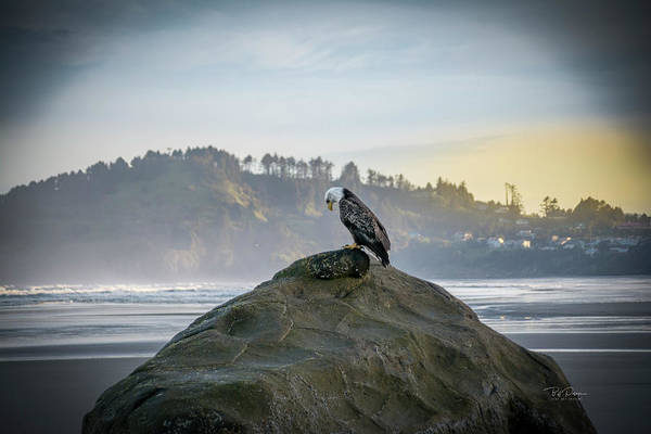 Photograph - Eagle On Beach by Bill Posner