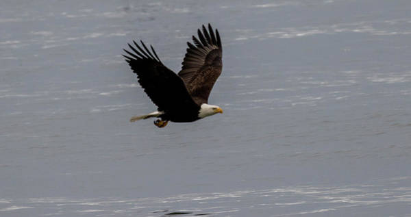 Photograph - Eagle Over The Ocean by Gloria Anderson