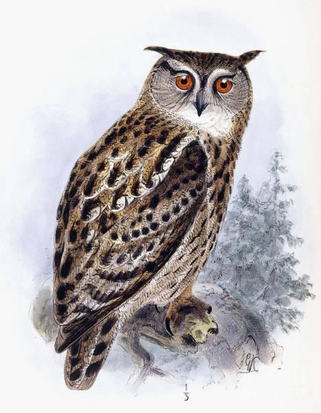 Wall Art - Painting - Eagle Owl  Bubo Ignavus by Johan Gerard Keulemans