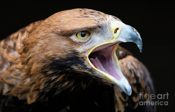 Photograph - Eagle Power by Eyeshine Photography