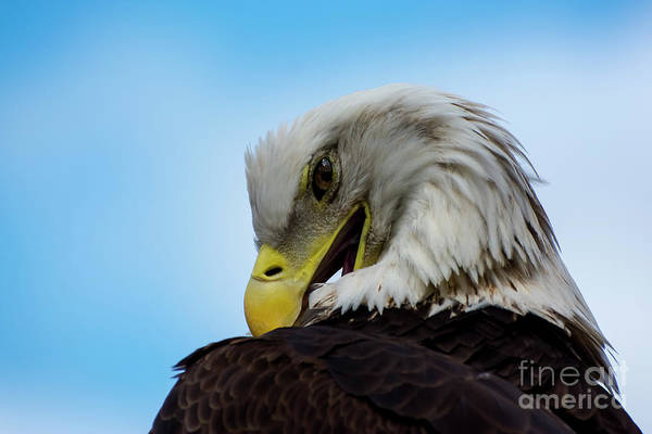 Wall Art - Photograph - Eagle by Quinn Sedam