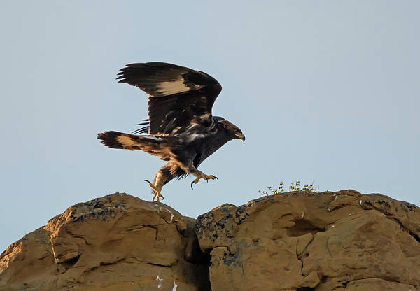 Photograph - Eagle Rock Hopping by Loree Johnson