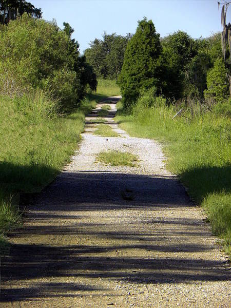 Alligator Alley Photograph - Eagle Roost Trail  by Chris Mercer