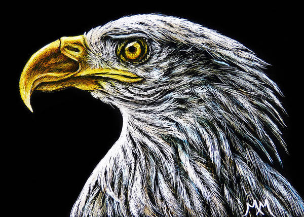 Drawing - Eagle - Sa96 by Monique Morin Matson