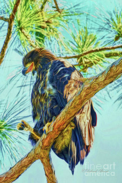 Photograph - Eagle Series Leaving Soon by Deborah Benoit