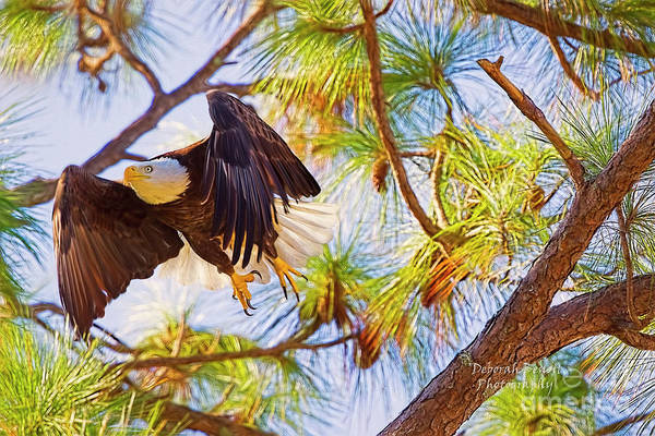 Photograph - Eagle Series Nesting 2018 by Deborah Benoit