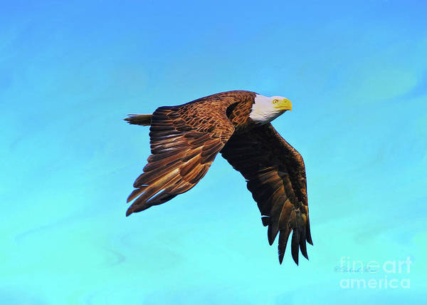 Photograph - Eagle Series The Glide by Deborah Benoit