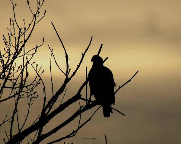 Silhoutte Photograph - Eagle Silhouette by Alison Gimpel