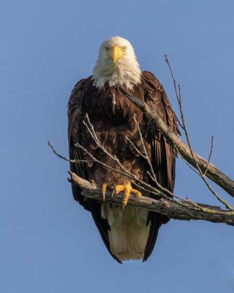 Photograph - Eagle Stare by Allin Sorenson