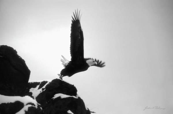 Eagle Takeoff At Adak, Alaska Art Print