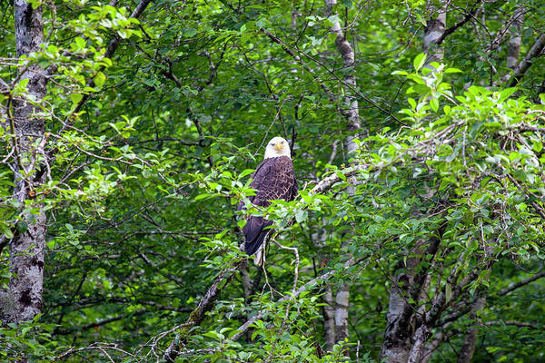 Photograph - Eagle Watch by Anthony Jones